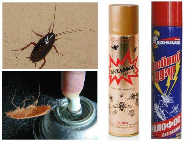 Дихлофос травит тараканов