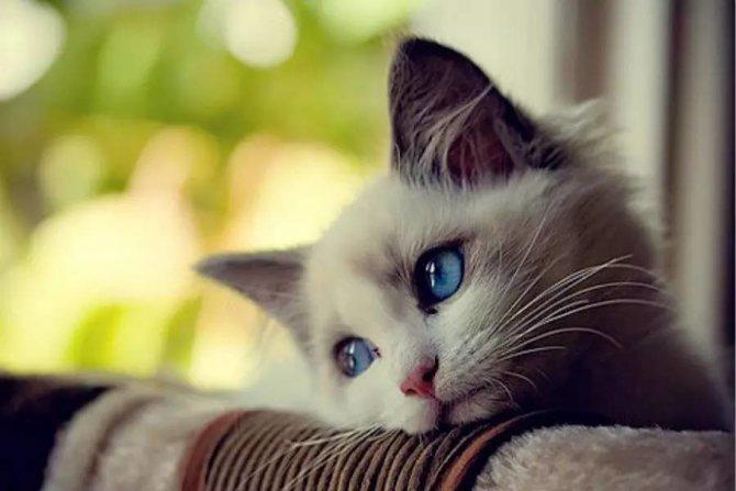 Дисбактериоз у кошек