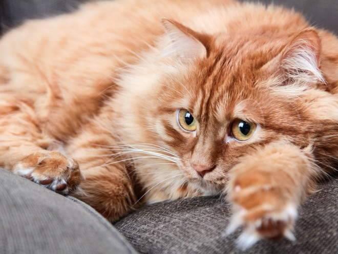 дисбактериоз у котенка симптомы и лечение