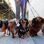 Длинные-породы-собак-Описание-особенности-виды-названия-и-фото-длинных-пород-собак-1