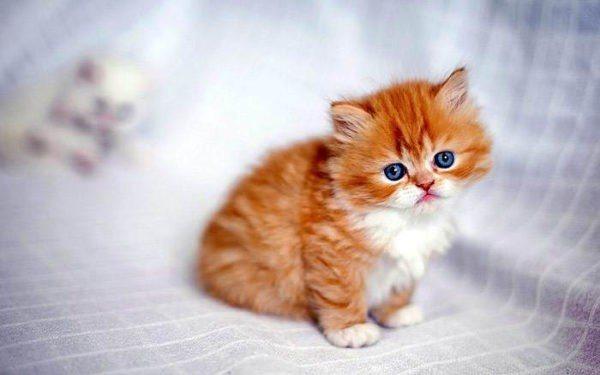 Для чего нужно следить за весом котёнка в разные периоды его роста