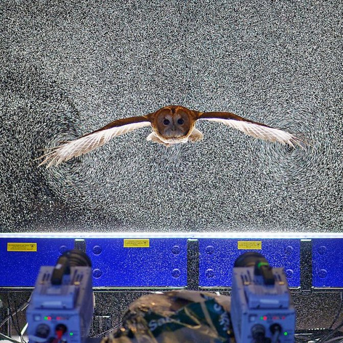 Для чего птице нужен хвост