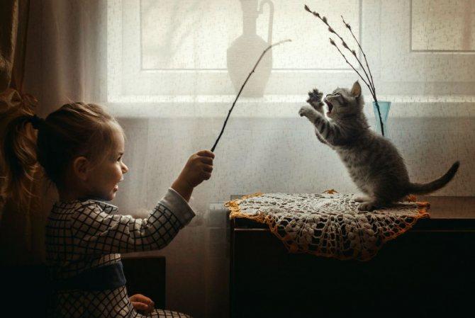Для котенка в игре важно не только движение, но и общение с человеком