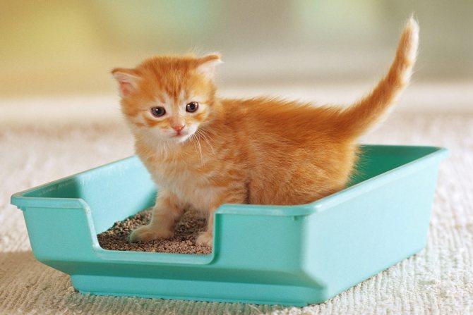 Для маленького котика желательно сразу приобретать взрослый лоток стандартного размера