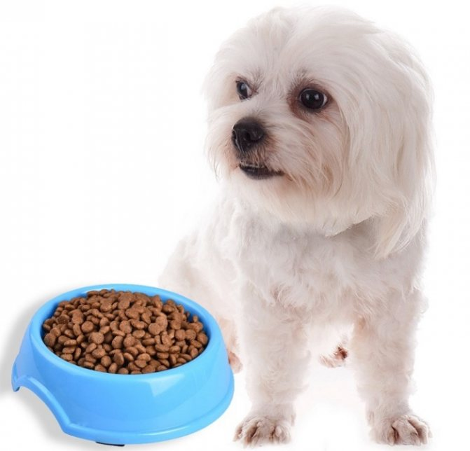Для миниатюрных собак