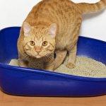 Для многих владельцев кошек отказ животного пользоваться лотком становится весомым стимулом к достижению поставленной цели