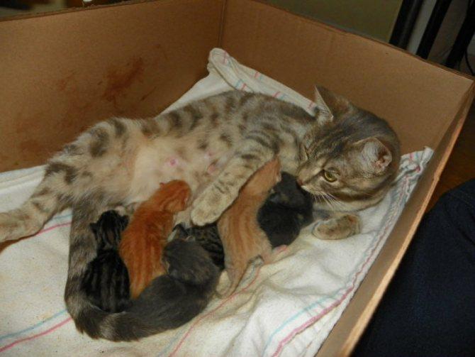 Для того, чтобы роды прошли комфортно, кошка заранее подыскивает себе подходящее место