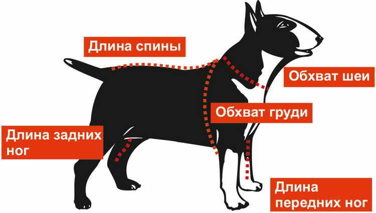 до какого возраста растут собаки мелких пород