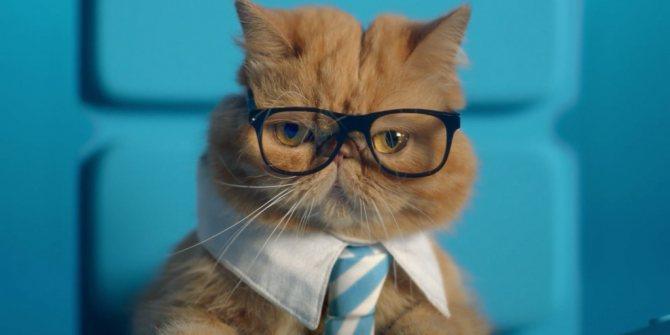 договор купли-продажи в документах на кошку