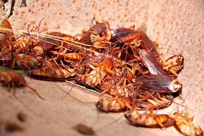 дохлые тараканы