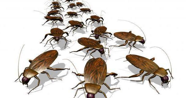 дома завелись тараканы