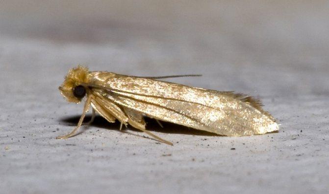 Домашние насекомые: описание, образ жизни, особенности питания