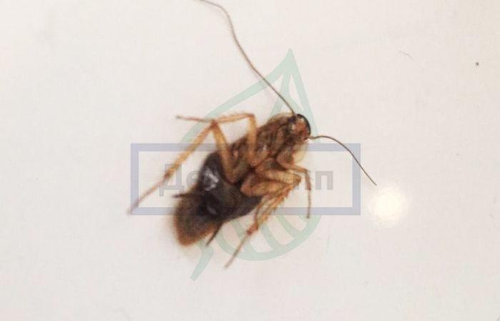 Домашние насекомые в квартире: фото и названия