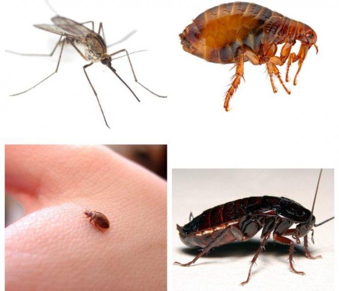 Черные жуки в квартире или доме – фото и названия