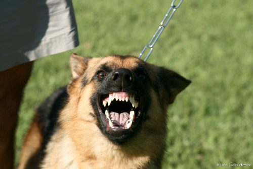дрессировка собаки быть злой