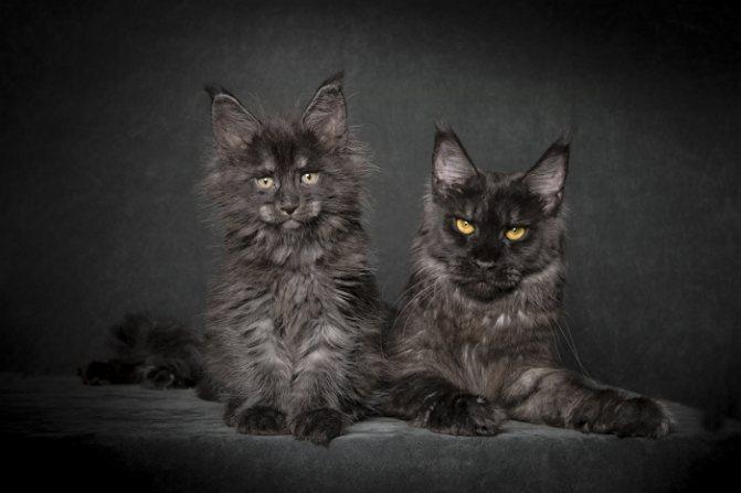 два черныша в черной комнате