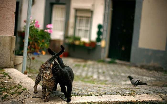 Два кота на улице трутся друг об друга, фото фотография