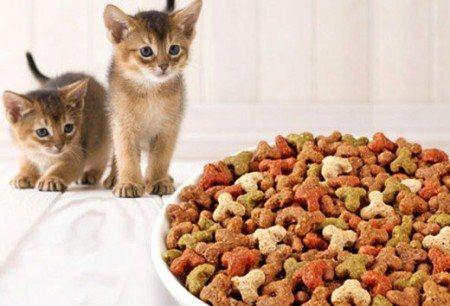 Два котенка смотрят на корм
