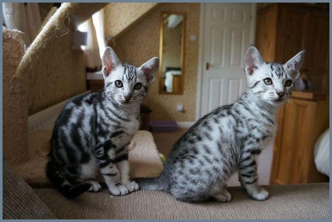 Два котенка у шкафа