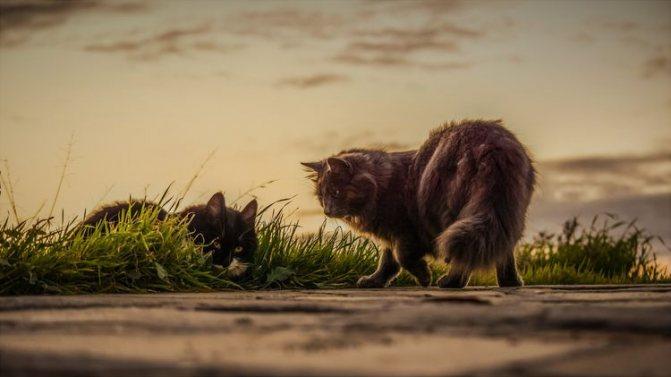 Две кошки ушли из дома