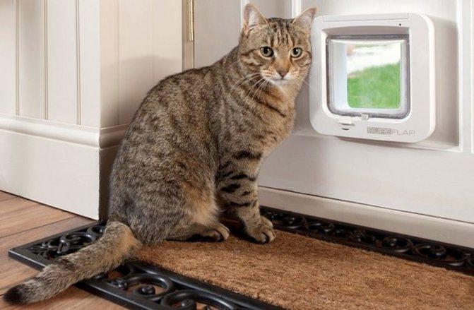дверь для кошки своими руками фото