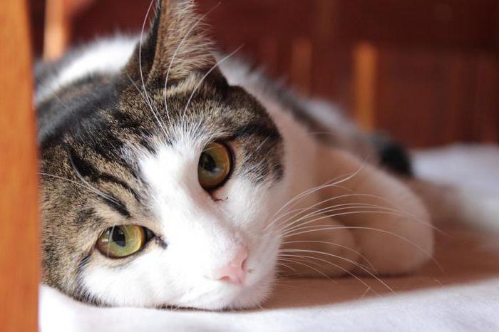 дворовые кошки