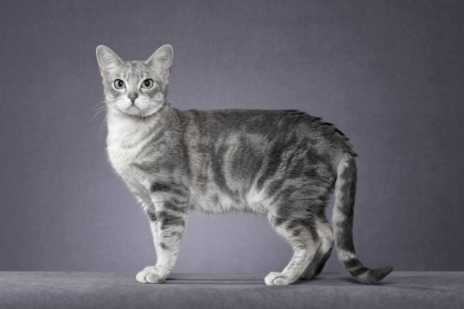 дымчатый кот в серой комнате