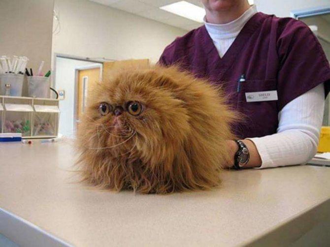 дюфалайт инструкция по применению в ветеринарии