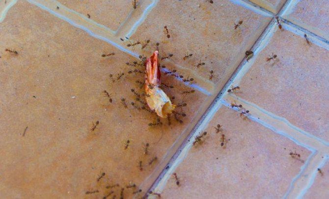 Еда на полу привлекает муравьев