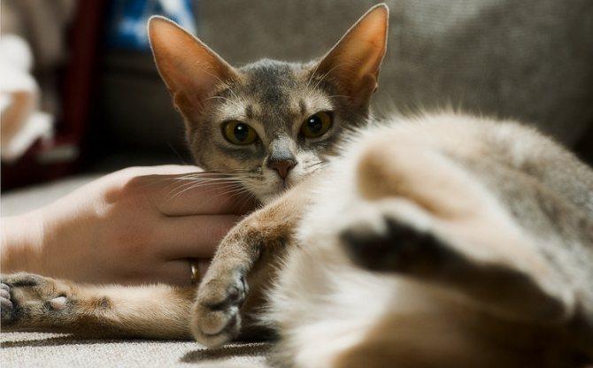 Единственный безопасный способ успокоить кошку