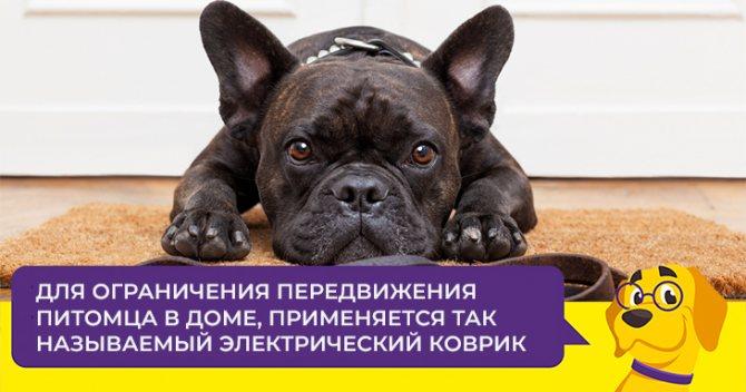 Электронный ошейник: от сомнительного изобретения к продвинутому методу обучения собак