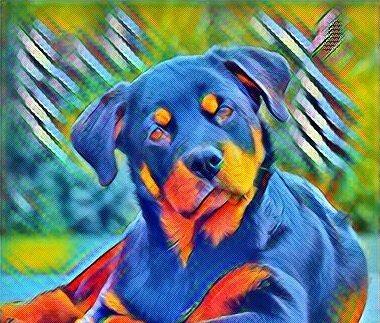 Эозинофильный гастрит у собак