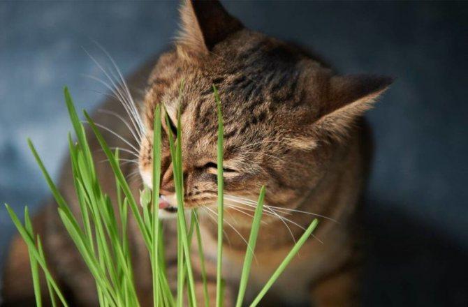 Если кошка абсолютно здорова, то можно самостоятельно рассчитать порцию и необходимость в полезной добавке, homevet.kiev.ua