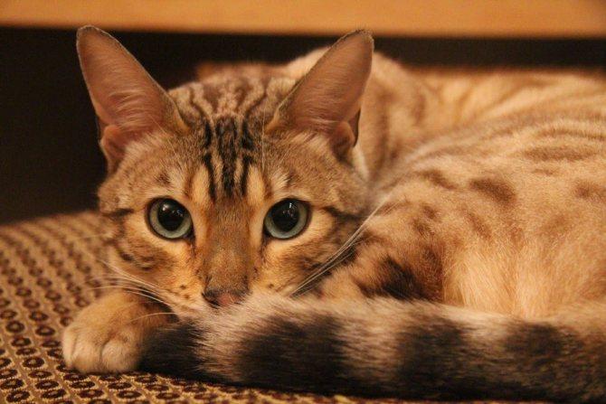 Если кошка не ест и рвет белой пеной, это может считаться признаком достаточно серьезного заболевания