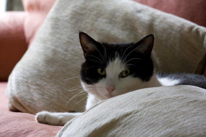 если кошка заболела