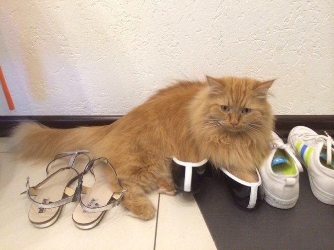 Если кот нагадил, не следует его наказывать