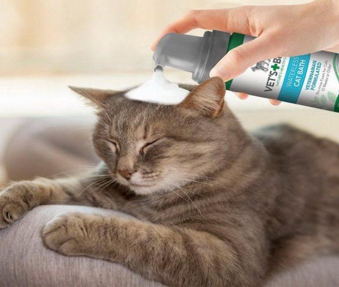 Если молодой котик боится воды, то шерсть лучше чистить с помощью сухого шампуня