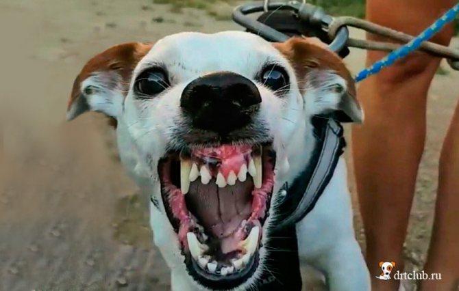 Если собаку покусали
