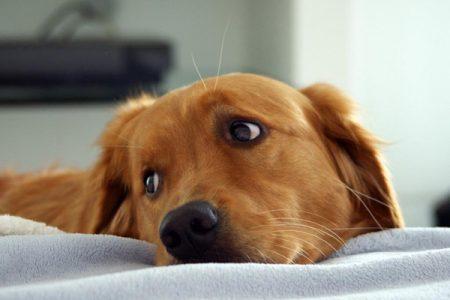 если течет кровь из носа у пса