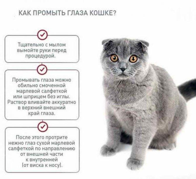 Если третье веко воспалилось, придерживаются правил промывания глаз, фото https://lapaxvost.ru