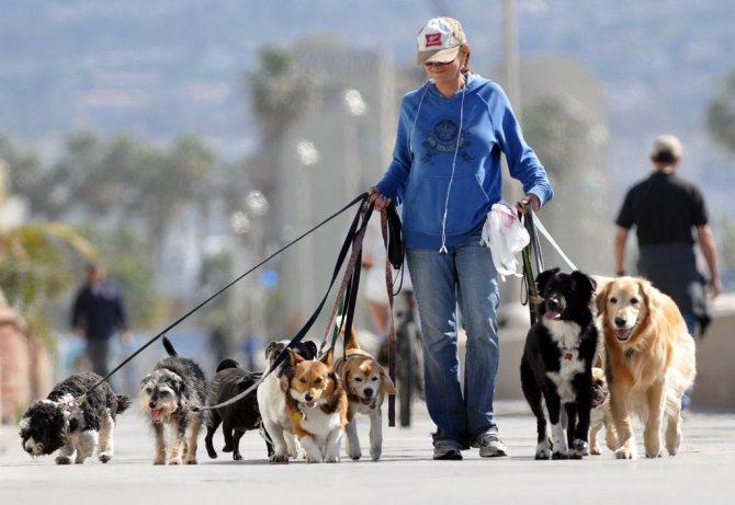 Если вам некогда, наймите профессионального выгуливателя собак