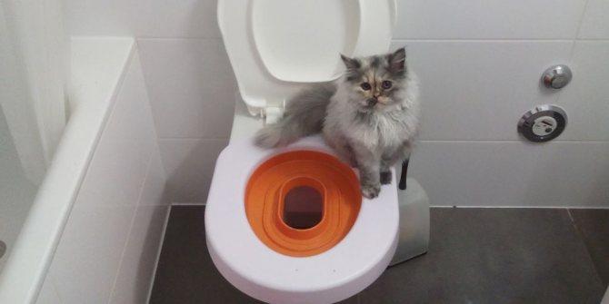 Если владелец не желает ставить в квартире кошачий туалет, то есть альтернативный выход – специальная накладка на унитаз