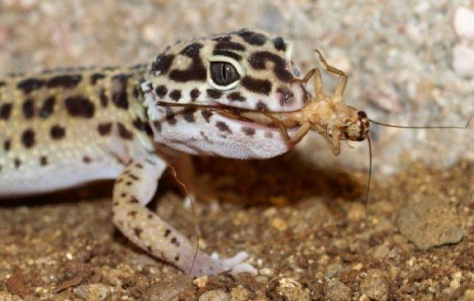 естественные враги тараканов