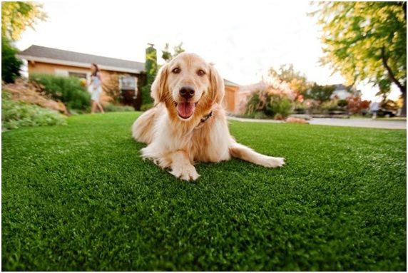Ежедневно для поддержания здоровья собаке нужно сбалансированное питание и частые прогулки