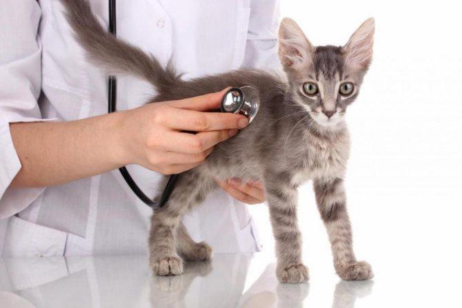 Фибросаркома — всё об опухоли у кошек. Онкологические болезни собак