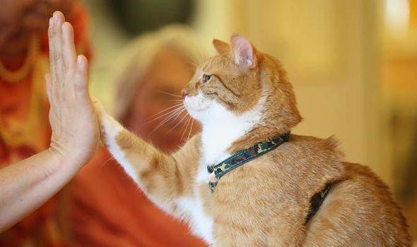Физические нагрузки для кошек