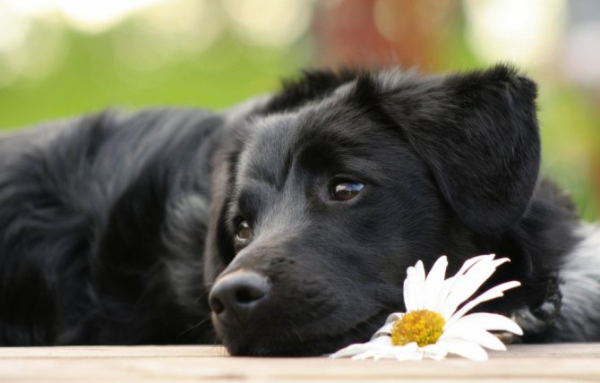 физиологические причины, по которым собака вялая