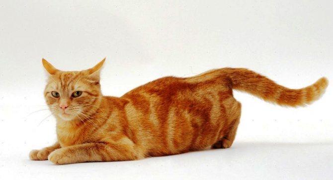 Физиология кошек