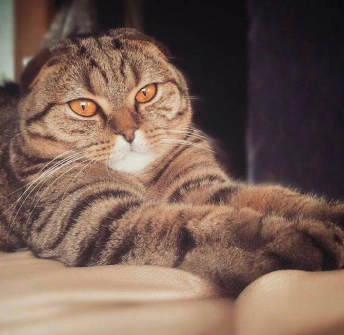Флегматичный и вальяжный кот