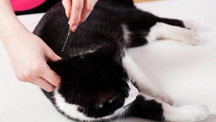 флексопрофен для кошек инструкция цена